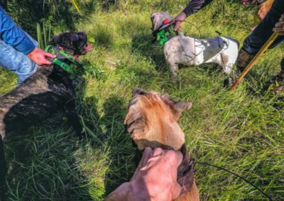hunting-with-dogs