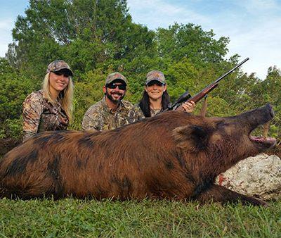 guaranteed hog hunts in florida